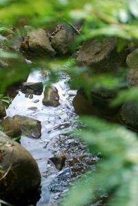 Rio Agua Blanca